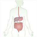 esofago_stomaco__fegato_cist__intestino_123x123