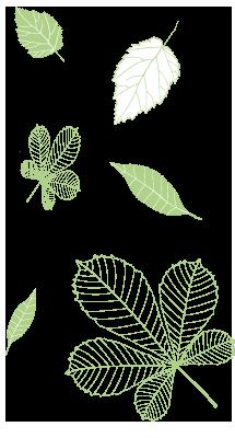 bg-foglie